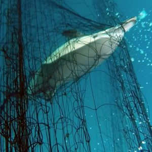 Fatal fishing methods at John West kills vast quantities of dolphins