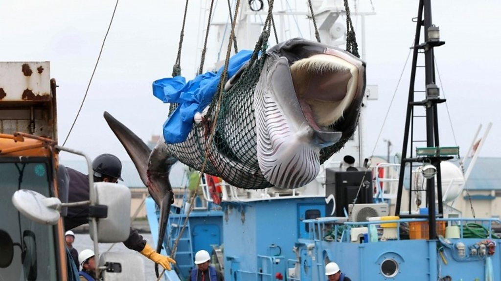 Japan to resume whale hunts in Antarctic