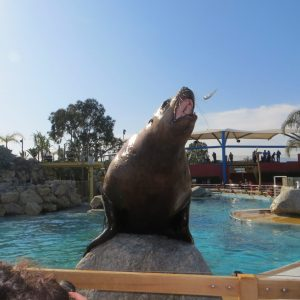 Marineland reopened after flooding… tanks still dirty, too small and full of algaes…