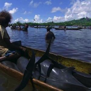 Les dauphins dans les Îles Salomons: la chasse de viande et de dents !