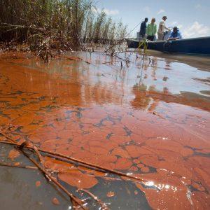 La reproduction des dauphins heurtée par la catastrophe pétrolière de BP