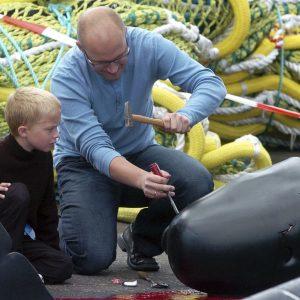 Update on the Faroe Islands' tradition!