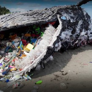 An Cosmetic Expert's view on plastic pollution