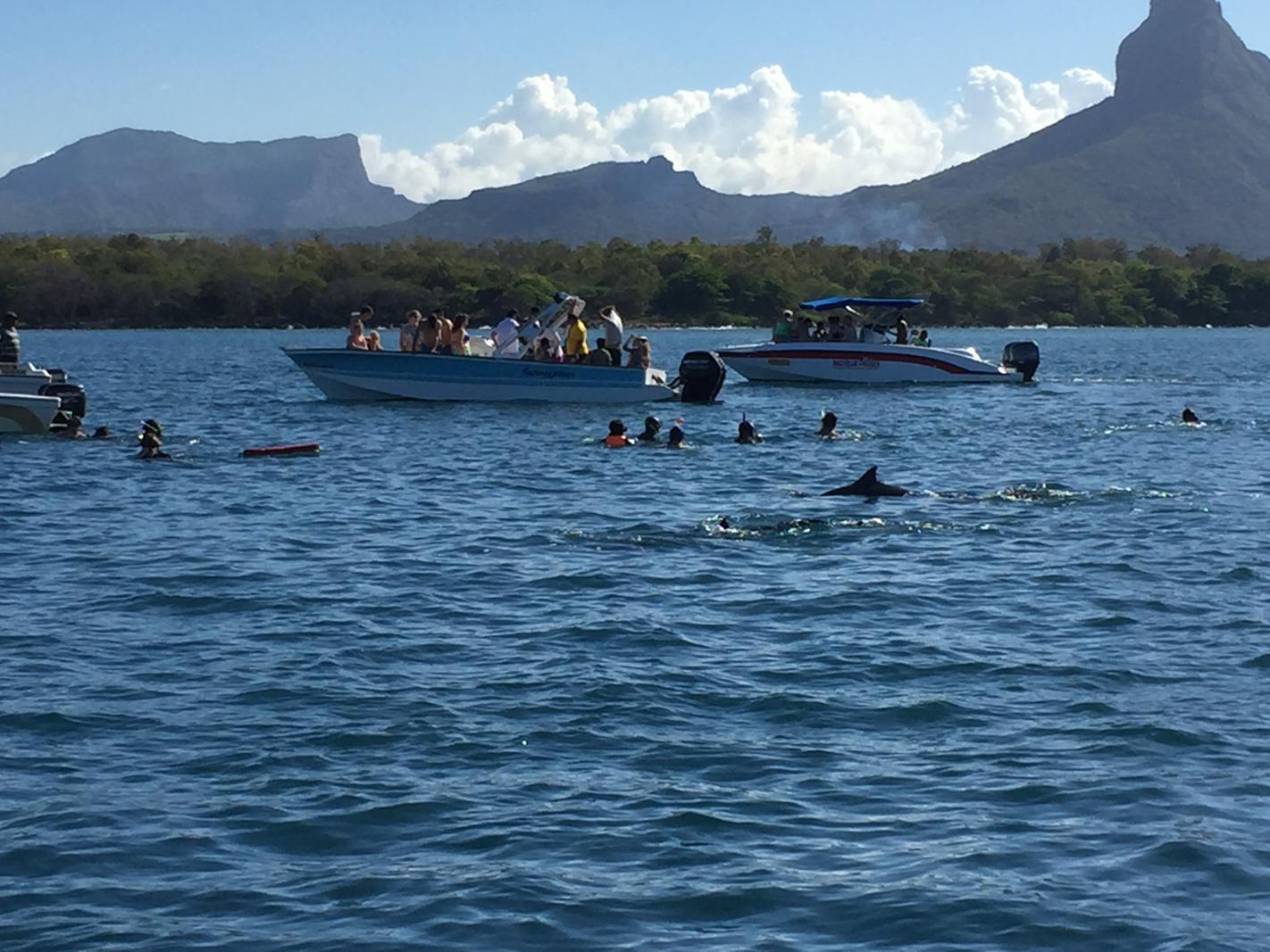 Décembre 2017 – Nager avec les dauphins à l'Île Maurice