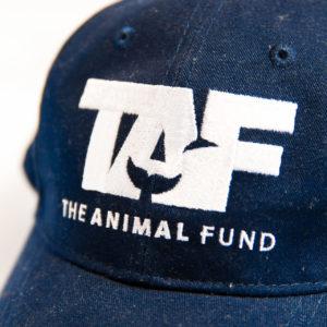 CAP in Blue